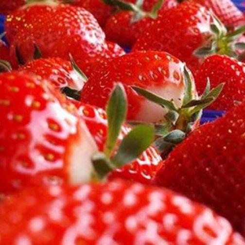 erdbeeren-2015